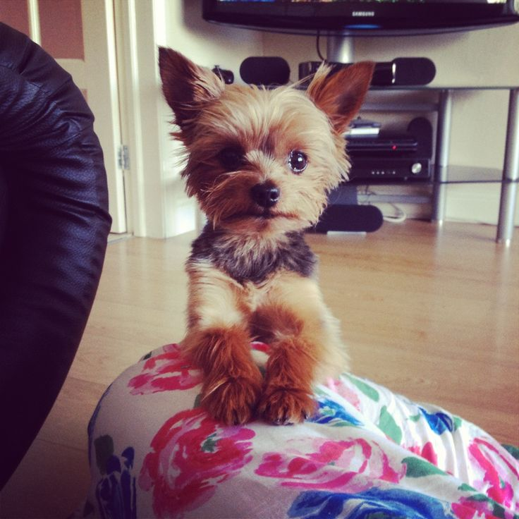 Love Yorkies? View Our Facebook Page https://www.facebook.com/pages/Dont-Hurt-Me-Im-Your-Best-Friend/636479679717238 & Join Over 9,000 Other Dog Lovers