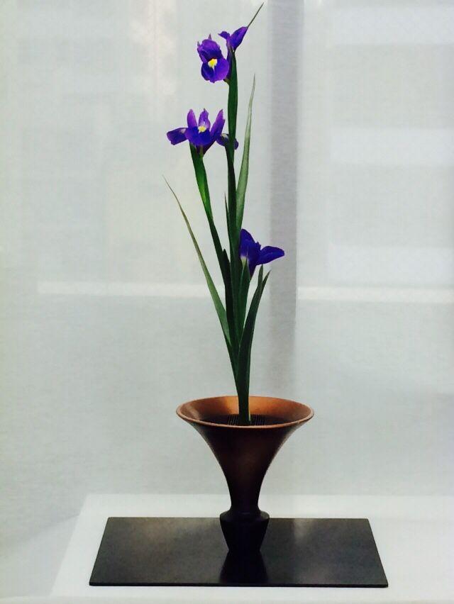 Shouka Style with Iris