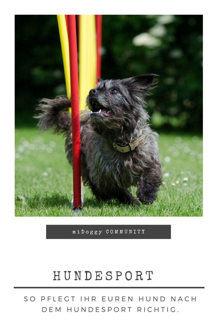 || #Hund || Ideen || #Hunde || Tipps || Tricks || Ideen || Liebe || Welpen || Bilder|| #Hundesport