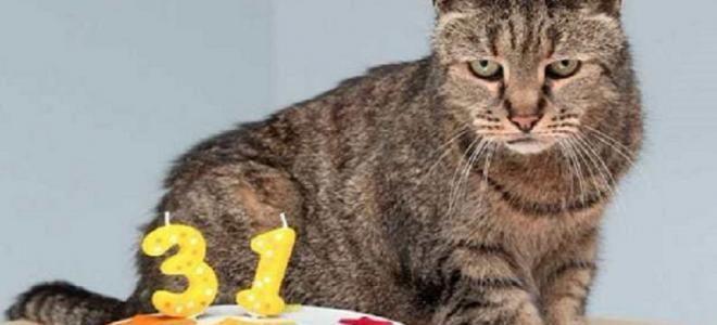 Le chat le plus âgé du monde fête… son 31ème anniversaire !