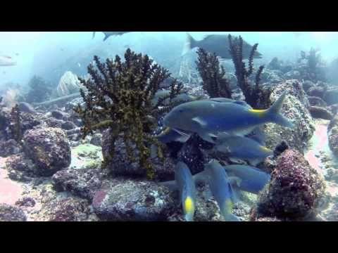 Sumatra Eco Tourism - Provides Information about Eco Tourism in Aceh, Sumatra - Indonesia
