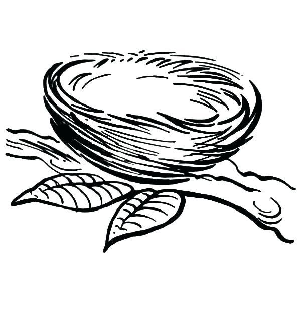 Bird Nest Eggs Coloring Page Colouring Pages 3 With Firmakaydetorg