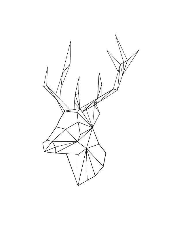 Geometric Line Drawing Tattoo : Best geometric animals images on pinterest