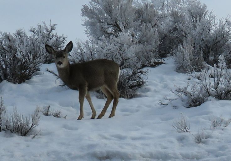 White-tailed deer research projects - Wisconsin DNR