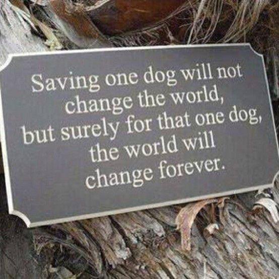 Rescue dogs by helen