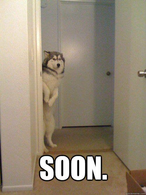 Soon Dog memes | quickmeme