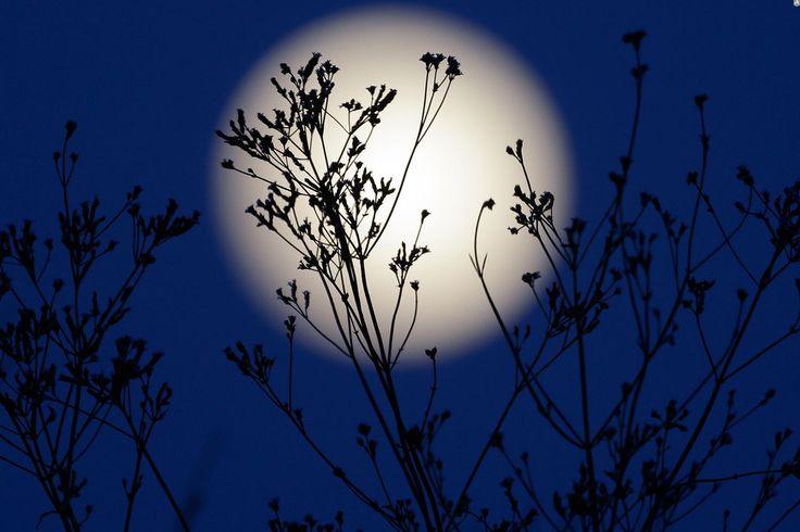 Лунный день сегодня, 20.12.16: Влияние убывающей фазы Луны