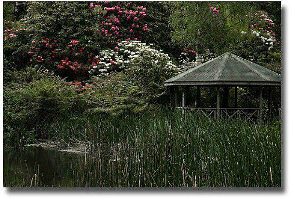 Rhododendron gardens Olinda Melbourne Australia compliments of http://www.flickr.com/photos/d-l-j-h/3040496436/