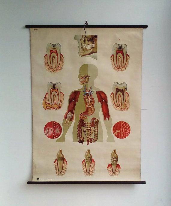 46 Best High School Anatomy Class 101 Images On Pinterest Anatomy