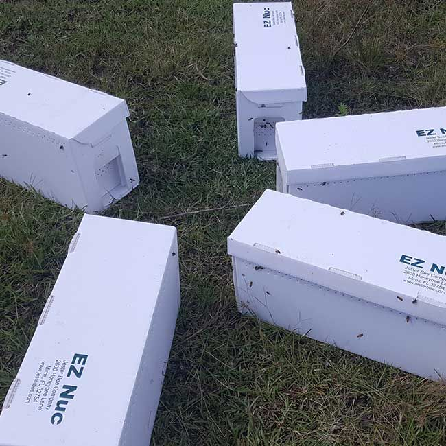 Amazing Bee Nucs For Sale Quality Honey Bee Packages From Bee Serious LLC
