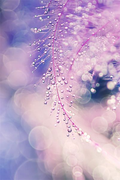 Dew on pink feathers