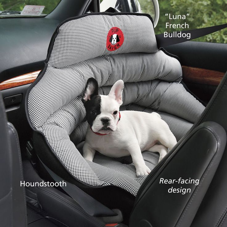 cool Crash-Tested Dog Safety Seat - Dog Beds, Gates, Crates, Collars, Toys, Dog Cloth...
