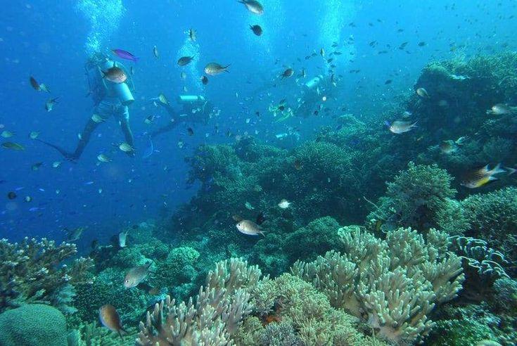 Komodo National Park(Nusa Tenggara Timur, インドネシア)|コモド島とその周辺(Shin  Okamotoさん) - 04