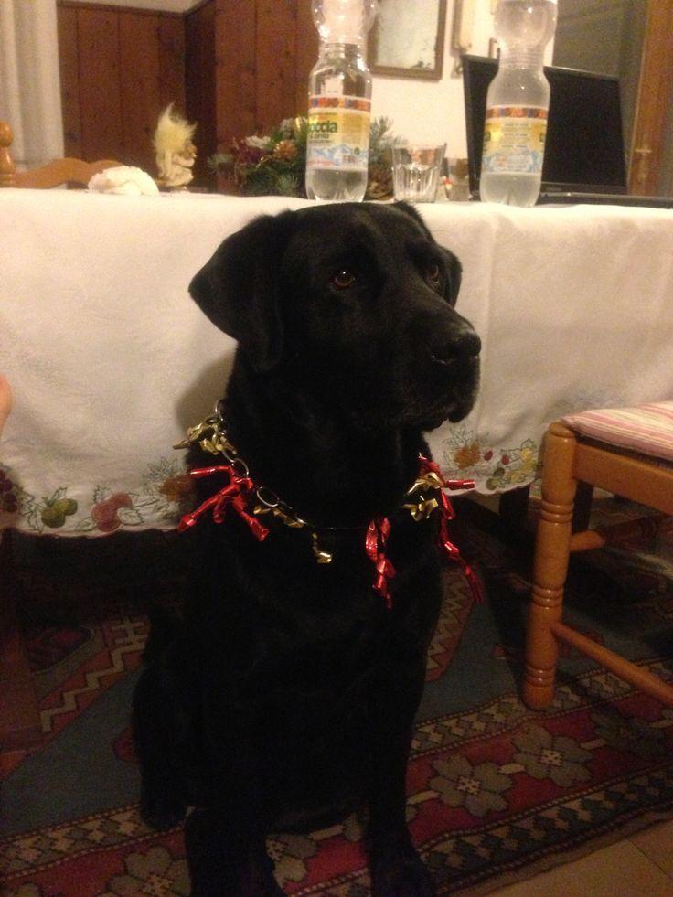 Argo for Christmas
