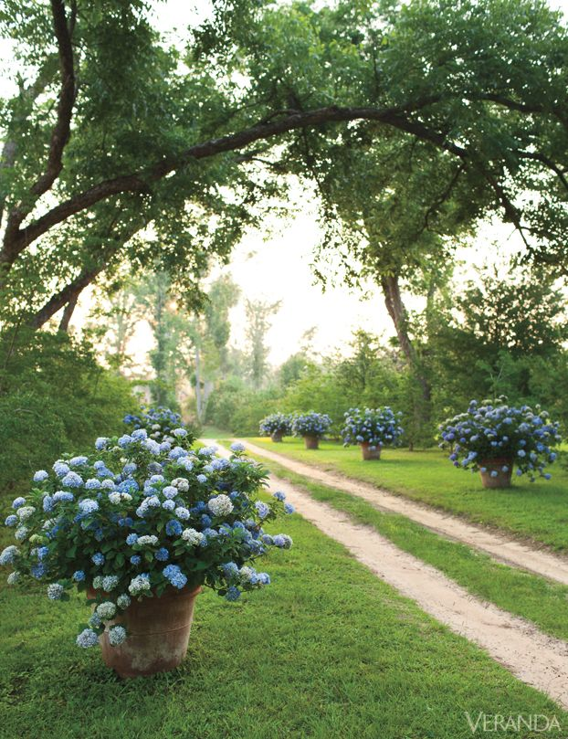 If this grand cottage seems effortless and breezy, that's because it is. Nothing's overworked, nothing's over thought, nothing's overlooked. It's polished, relaxed and divine. Should that surprise us? No, this is what comes with maturity and taste. Not to mention talent. An allée of hydrangeas, including 'Nikko Blue,' creates a sense of occasion on the front drive to Gatewood's compound.   - Veranda.com