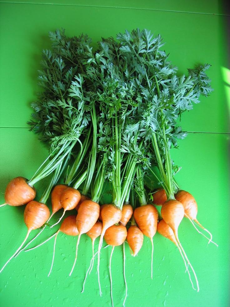 17 Best images about Carrots on Pinterest