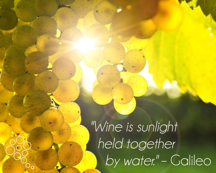 """Wine is sunlight held together by water."" – Galileo Galilei (Italian physicist, mathematician, astronomer, and philosopher)  More wine quotes: http://www.wineponder.com/wine-quotes/"