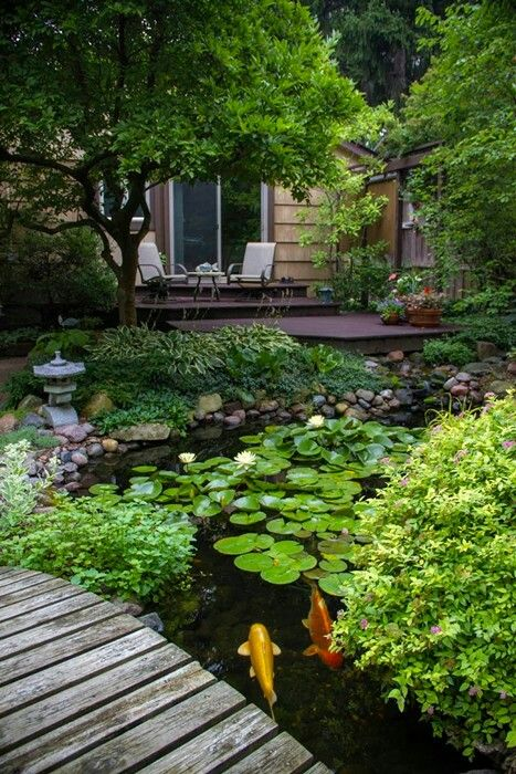 Koi ponds add a great touch to any garden