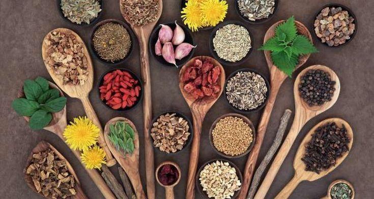 6 θεραπευτικά βότανα που αξίζει να καλλιεργείτε στη βεράντα ή τον κήπο σας