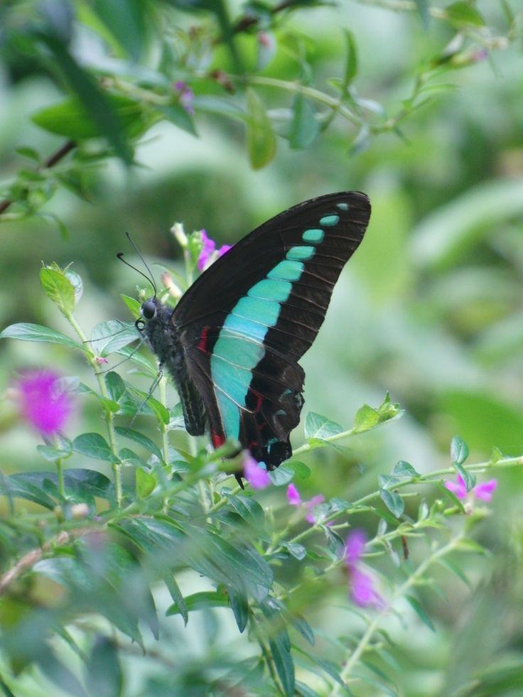 Pflanzen Schmetterlinge Anlocken