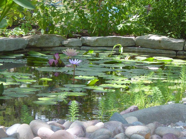 17 Best Images About Water Gardens On Pinterest Garden