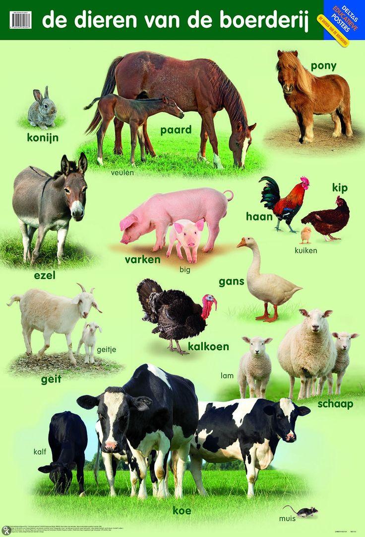 Poster De dieren van de boerderij