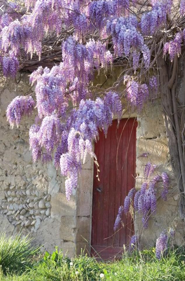 Pin By Rachel Summers On Flowers Easy Garden Wisteria How To Grow Wisteria