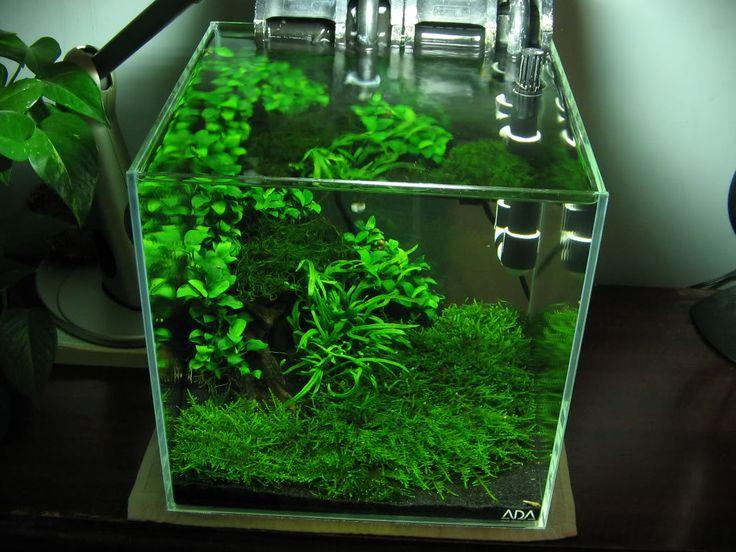 How to make java moss into a carpet