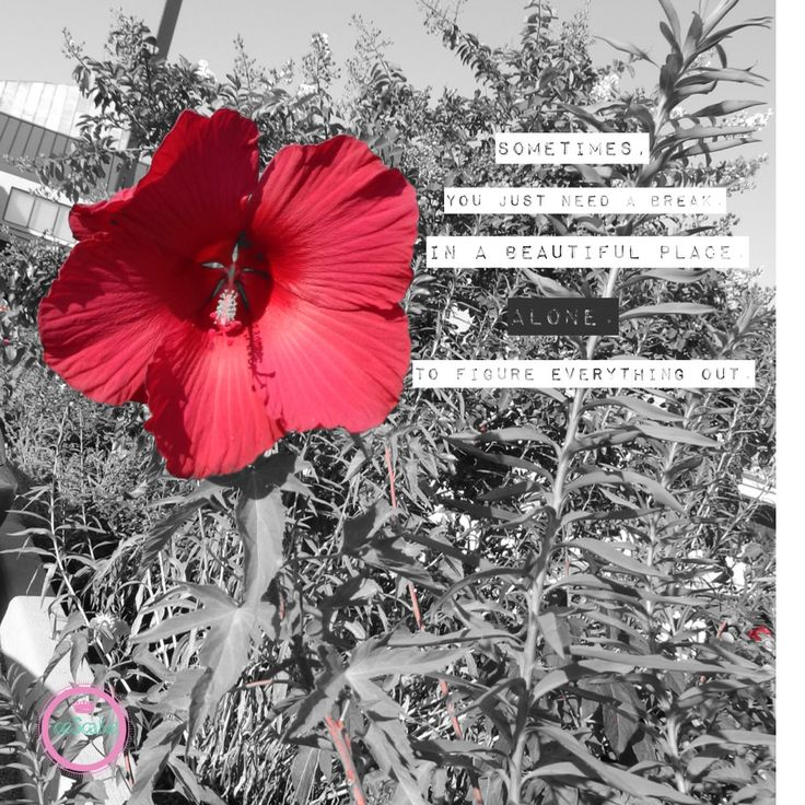 Flower Quotes Quote Inspiration Red Flower Quotes Image Quotes Color Pop