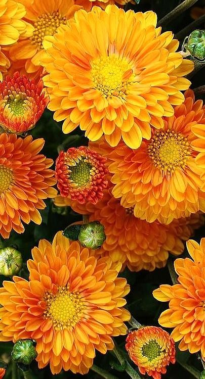 39 Best Fall Flowers Images On Pinterest Beautiful Flowers Floral Arrangements And Pretty Flowers
