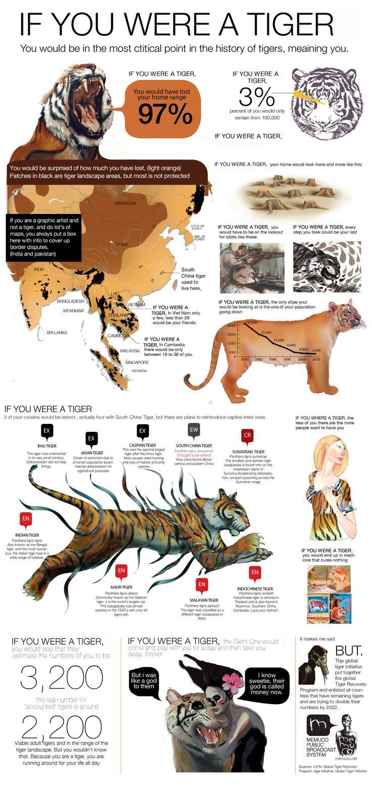 IF YOU WHERE A TIGER by memuco.deviantart.com  Vaya cosas de las que uno se entera, ahora me doy cuenta de lo muy en peligro que están los tigres alrededor del mundo, y según esto ya se está planeando un programa para repopular la población actual de tigres, ojala y se tome conciencia y se detenga la cacería y deforestación del habitat de estas magnificas criaturas, si lo entienden los invito a que le den un vistazo a este corto pero informativo documental.