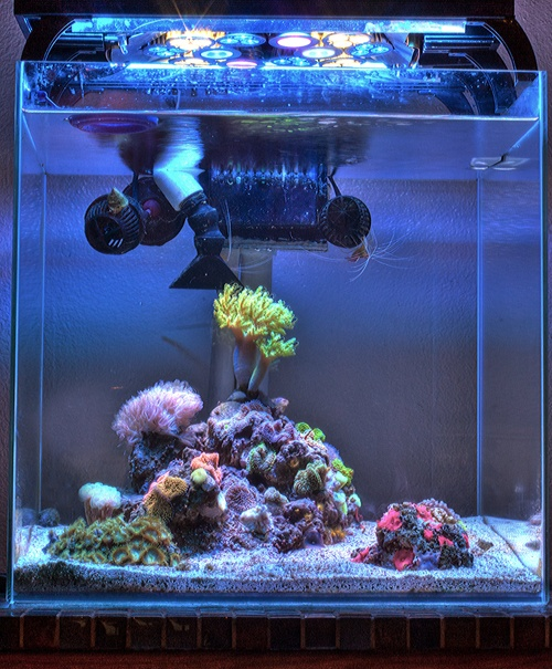 Mr. Aqua 25 Gallon Frameless Glass Aquarium Tank - Meticulously assembled with straight and true beveled cut glass and a fine application of high strength silicone, making the Mr Aqua aquarium not only watertight and rigid but aesthetically pleasing to the eyes. Size 18 x 18 x 18 in $103.99 #pet #fish #aquarium