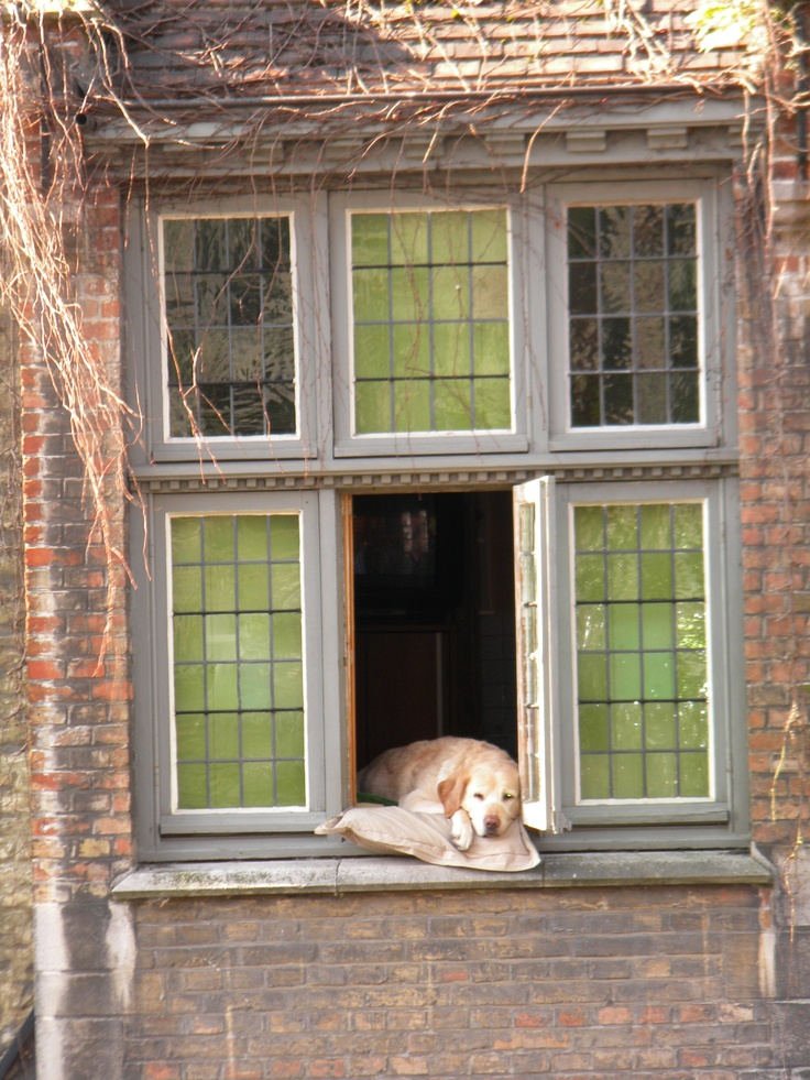 The sleepy doggy from Brugge