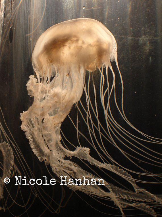 Jelly Fish Photo, Sea Creature, Aquarium, Animal Photography, Fine Art, Nature Photography, Beige, Gold, Ocean Life, Electric