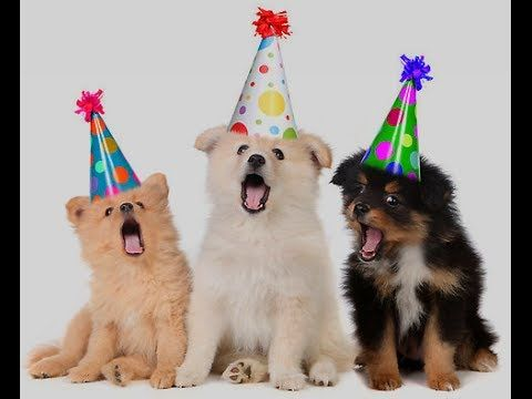 happy birthday funny - Dogs Song Happy Birthday - YouTube