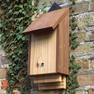 Putting up a bat box will give these fascinating night-time creatures somewhere safe to roost, raise their pups and sleep during the day.