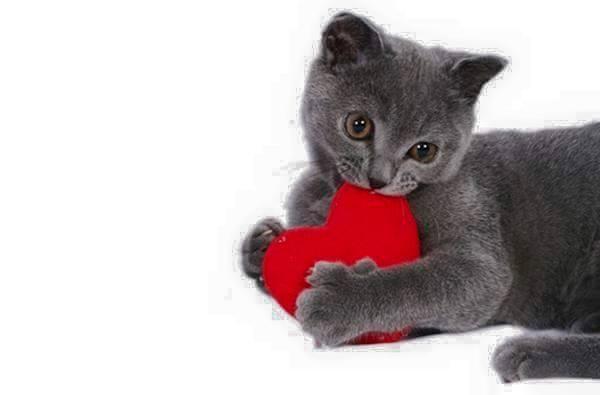 Descoperă imediat cum te poţi însănătoşi cu ajutorul acestei feline! Pisica este un inductor prin declanșarea unor procese de rezonanță ocultă benefice cu energii subtile benefice și un medicament …