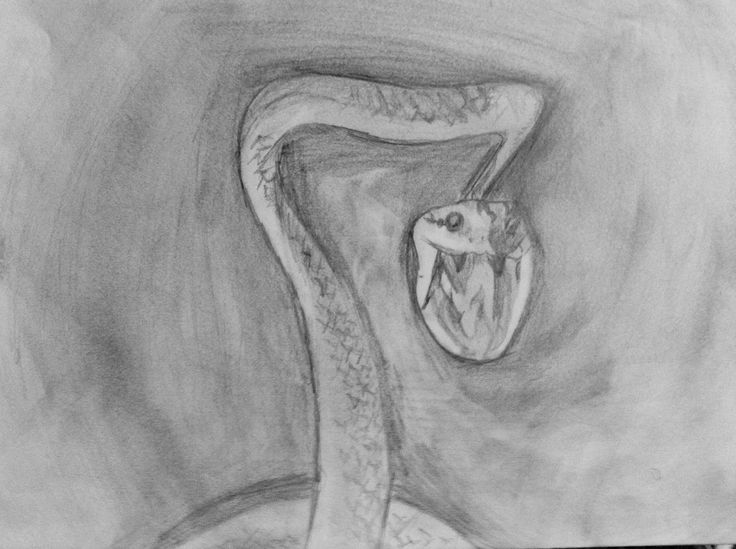 Pencil drawing of snak...