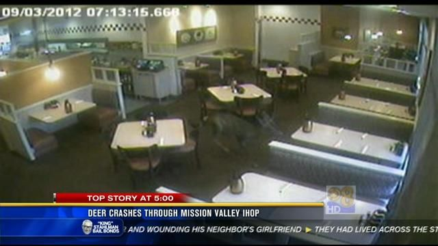 Deer crashes through Mission Valley IHOP - San Diego, California News Station - KFMB Channel 8 - cbs8.com