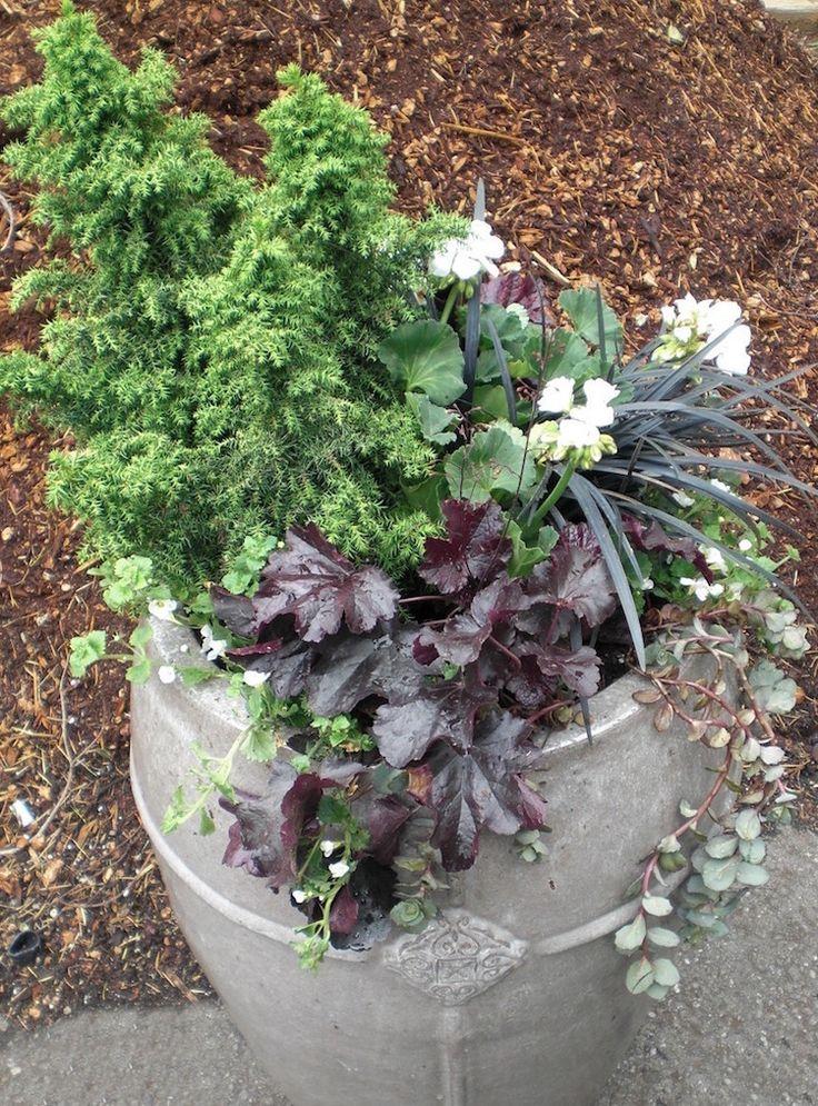 jardinière-béton-plantes-rustiques-mini-jardin-hiver-pot