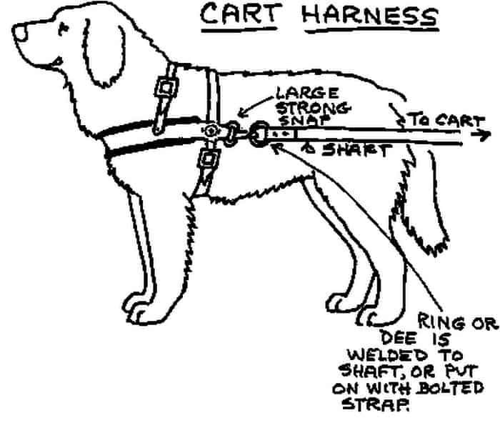 Dog harness how to put on #harness ; hundegeschirr, wie