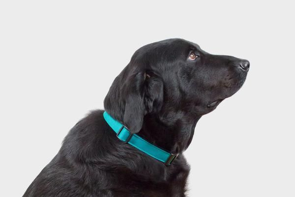 Funston Dog Collar - Funston Dog Collar - A simple yet classic collar in two bold colour options to compliment your pup // www.wolvesofwellington.com