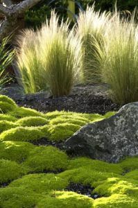 Moss and Mexican feather grass (Stipa Tenuissima) - t's beautiful, it's evergreen, it's a good size for mixing, it's a hassle-free foil for almost any other color in the garden, it's non-intrusive, it's as pleasing and textured in winter as it is in summer