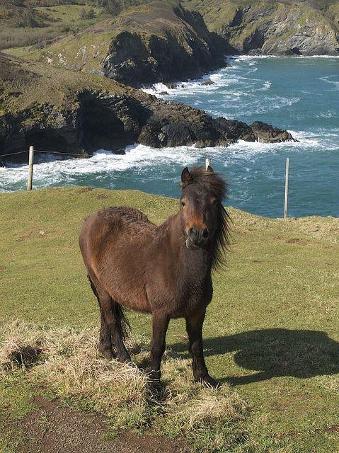 Wild Dartmoor pony on Dartmoor, Devon, England ~ almost looks like unicorn with that post in the background...