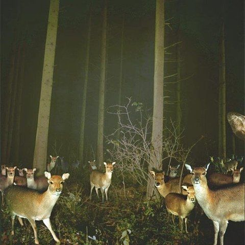 deer invasion. too creepy for a hunter