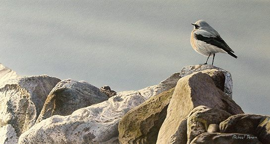 Wheatear Bird Painting by artist Michael Demain