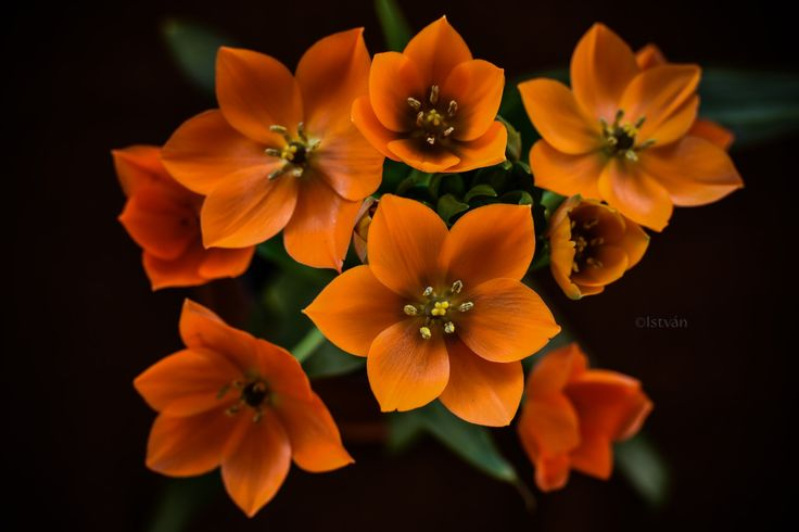 Orange bouquet - null