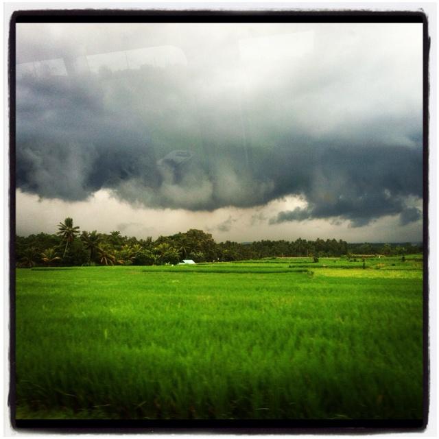 Ubud,Bali 2012