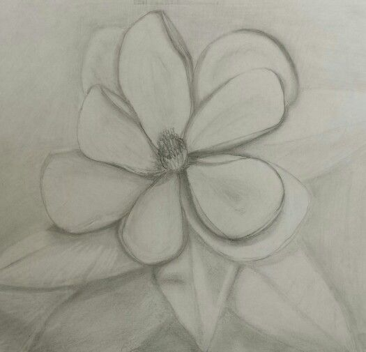 Working on a magnolia.