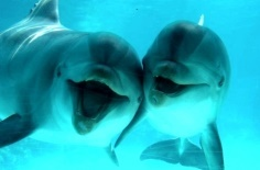 Oceans.  Love dolphins! Don't they just look like they're having such a good time.